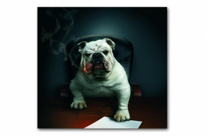 Tableau Animaux Chien Bulldog Avec Cigare 50x50 Cm Maeva Déco
